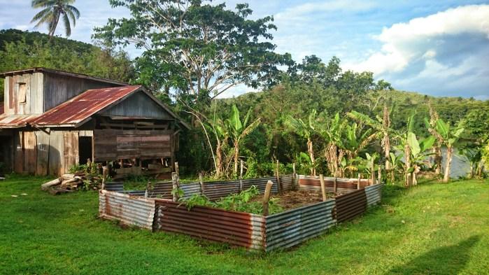 Picturesque farms near the Dreketi River, Fiji.