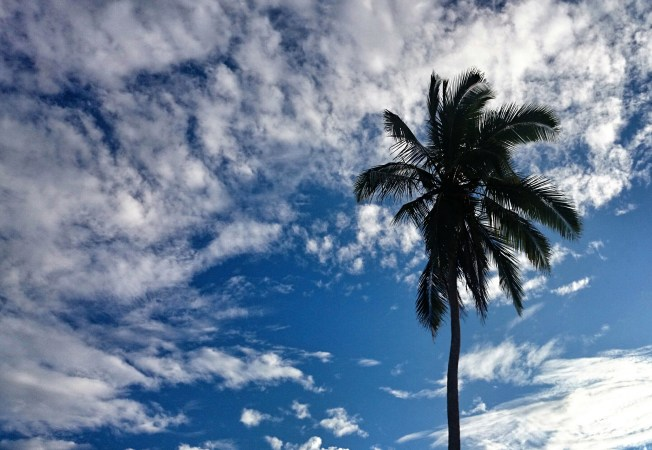 A palm tree against the sky