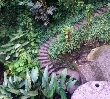 A winding path in the jungle at Las Pozas
