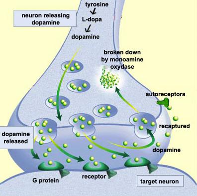 höstdepression SAD GAD dopamin