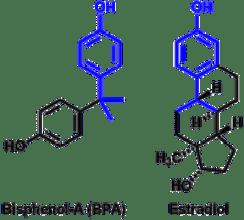 bpa-vs-estradiol