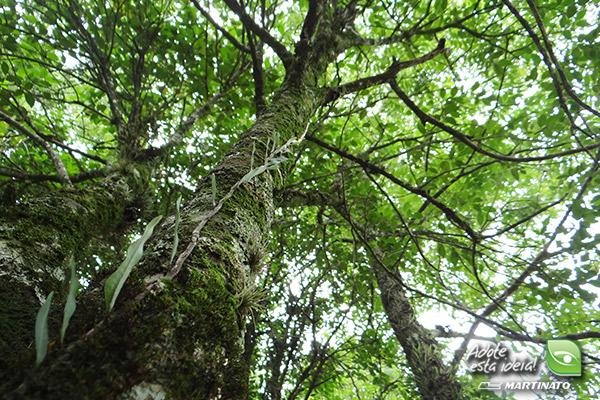 verde-martinato-reserva