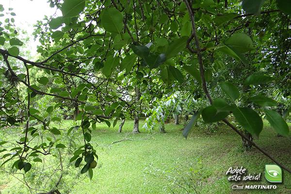 verde-martinato-reserva3