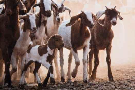 Himba Goat Herding on Breathing Color Pura Bagasse matte media