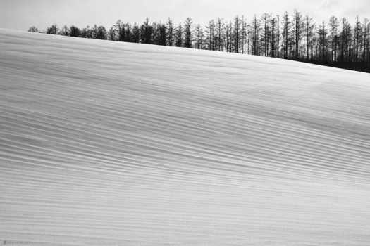 Plough Lines Under Snow
