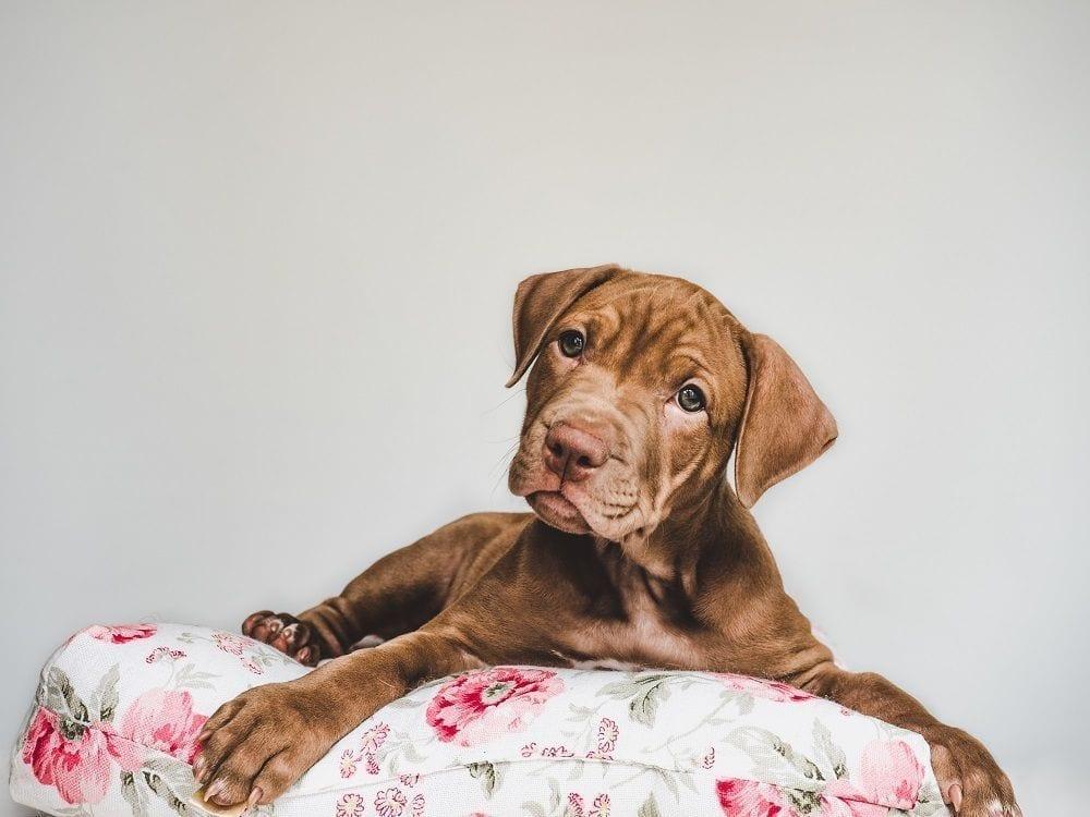 Cómo mejorar el descanso de los perros con una buena cama