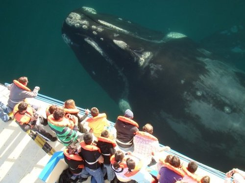 Ocean Giant, Whale Watching, San Diego, California