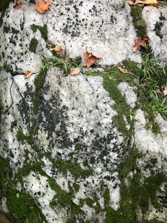 Limberlost_Ontario_Sep_2017 (19 of 21)