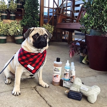 Pug with pet products - Martin's Home & Garden - Murfreesboro TN