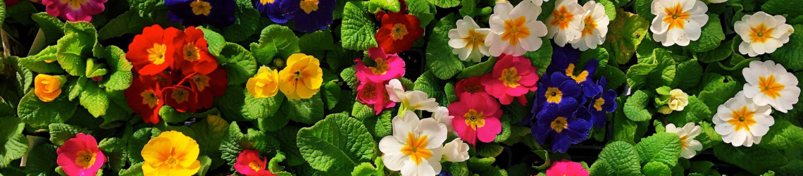 Primrose - Request a Speaker - Header - Martin's Home & Garden - Murfreesboro TN