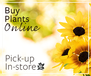 Buy Monrovia plants online, pick them up in-store