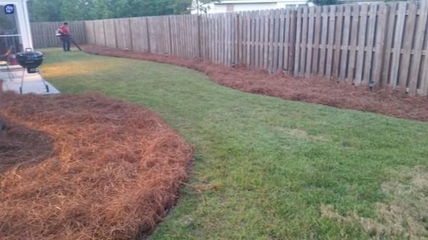 pine straw mulch bales