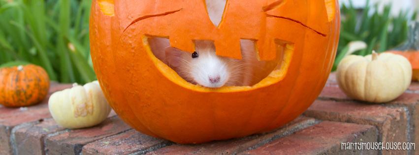 fb_pumpkin