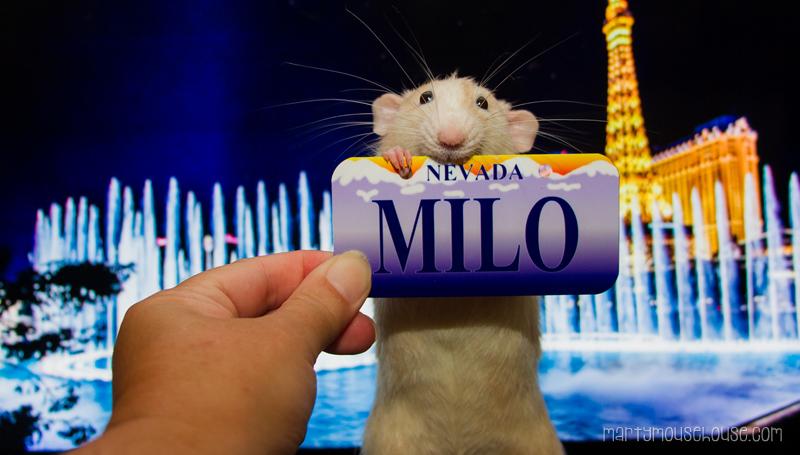 milo_NV