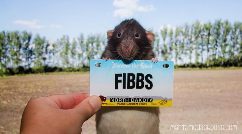 ND_Fibbs