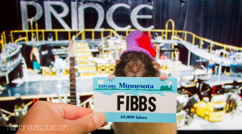 MN_fibbs