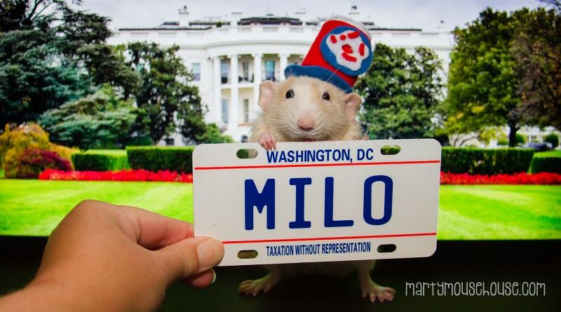 DC_Milo