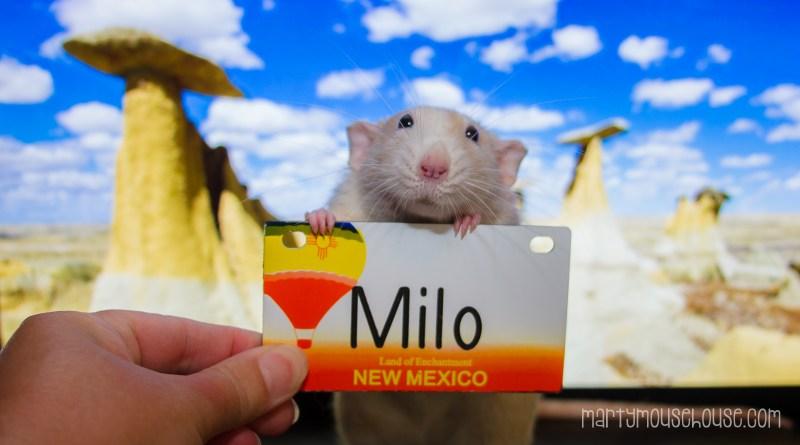 milo_newmexico
