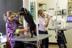 dog groomers