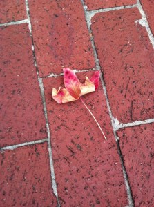 leaf on the ground marvia davidson