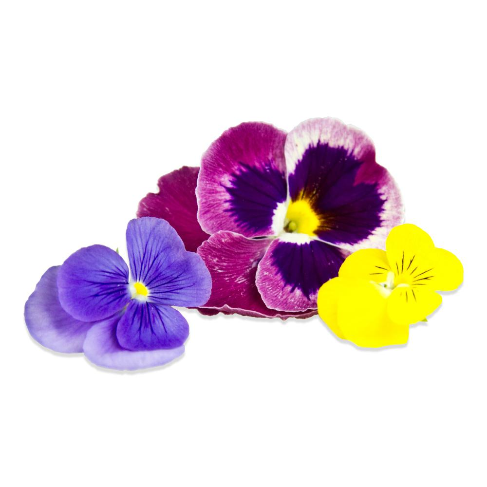 Bulk Edible Pansy Blossoms for Sale  Marx Foods
