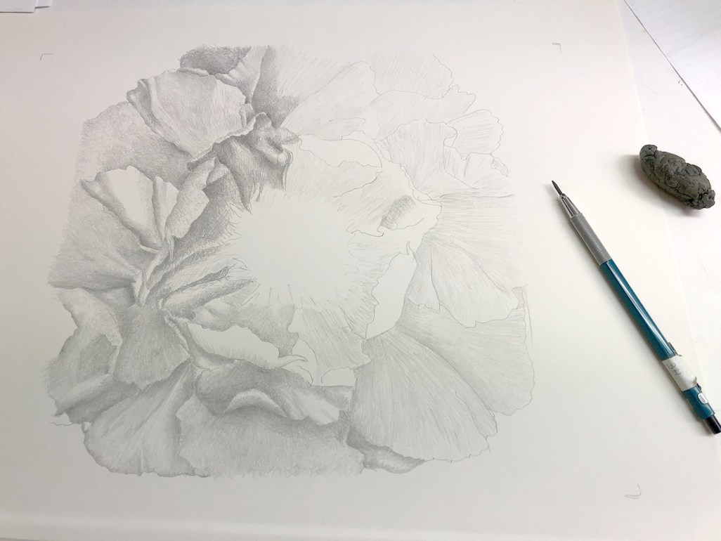 Drawing is Just Icing on the Cake - Mary Ahern Artist