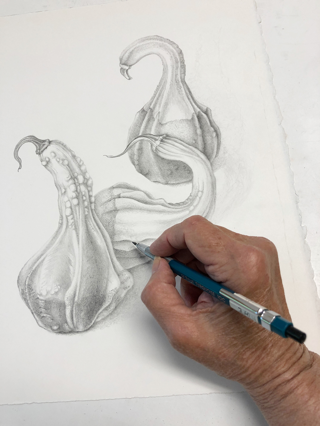 Graphite Drawing of Gourds in my Studio