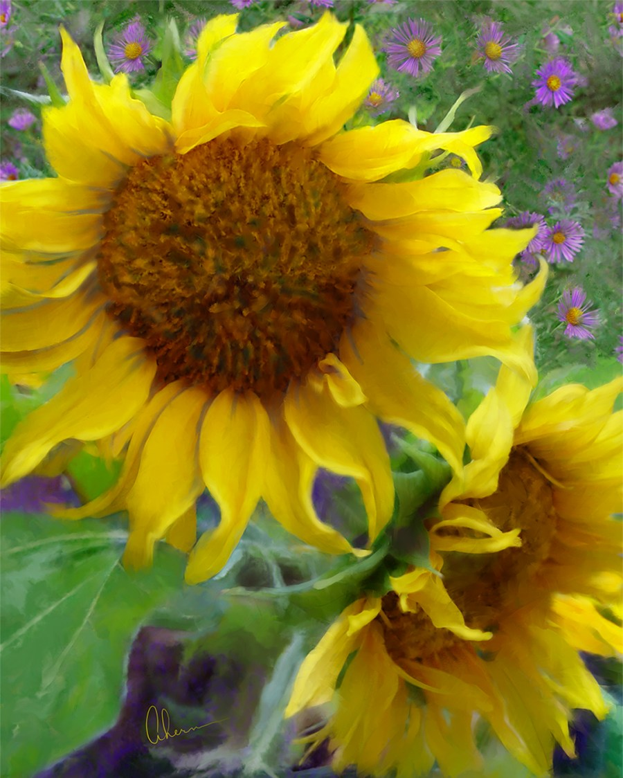 Sunflowers With Purple Asters-Artwork by the artist, Mary Ahern
