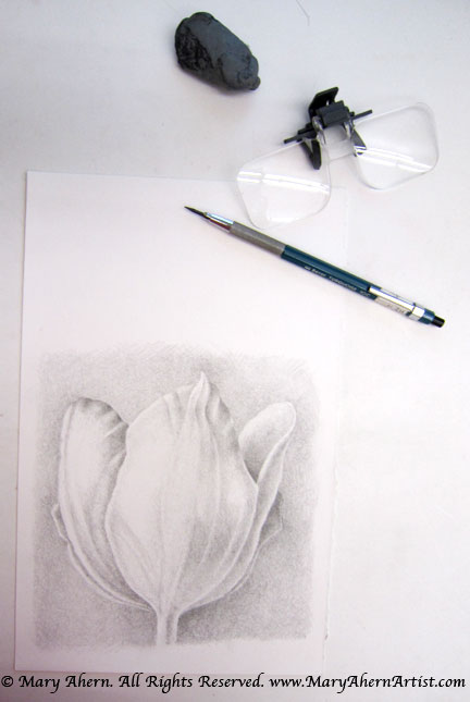 Tonal drawing of a tulip. I use a pair of magnifying lenses which I hook onto my bifocals to help me see the details