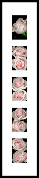 Rose Montage by the Artist, Mary Ahern