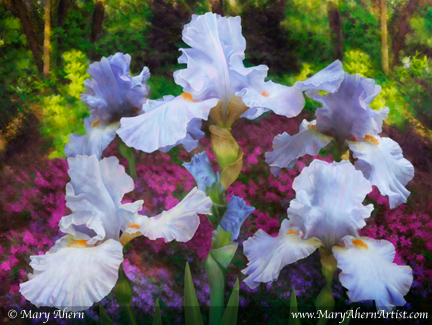 "Light Blue Iris in the Garden. Mixed Media Painting. 30x40"" Gallery Wrapped. © Mary Ahern."