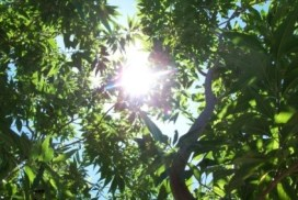 sunlight through tree image linking to Downloads page