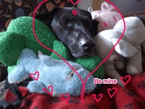 cooper valentine