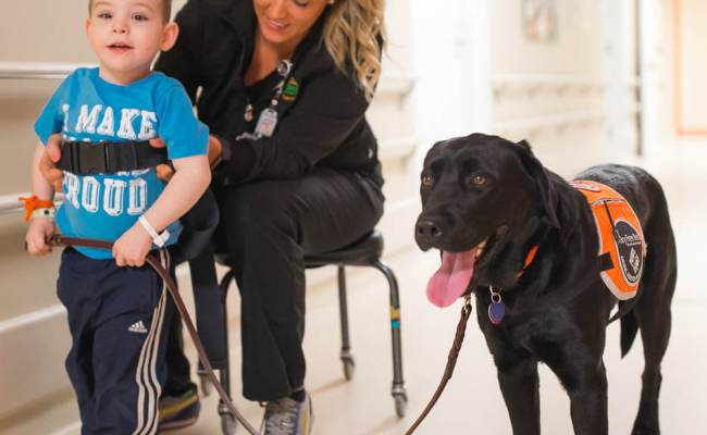 Animal Assisted Therapy Dog Joins Staff At Mary Free Bed