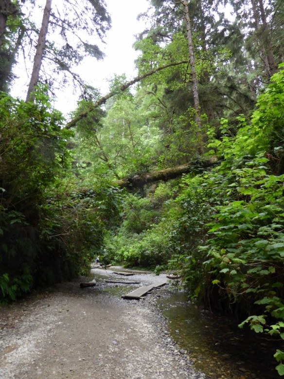 Beginning of the Fern Canyon Trail