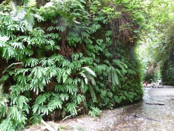 A wall of ferns!