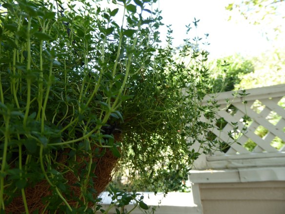 We've got thyme on our hands