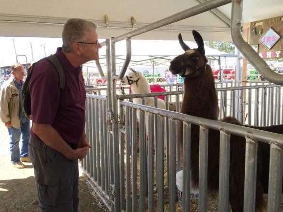 John and the very alert llama