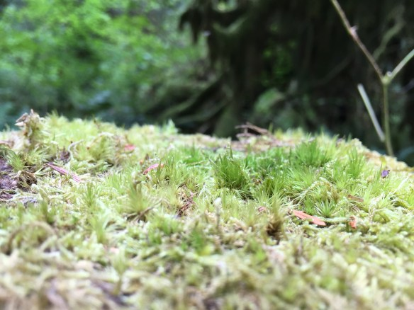 Moss growing on top of a fence post