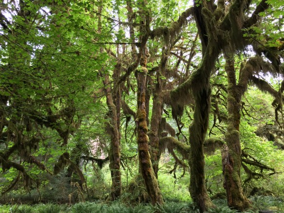 Moss covering the trees