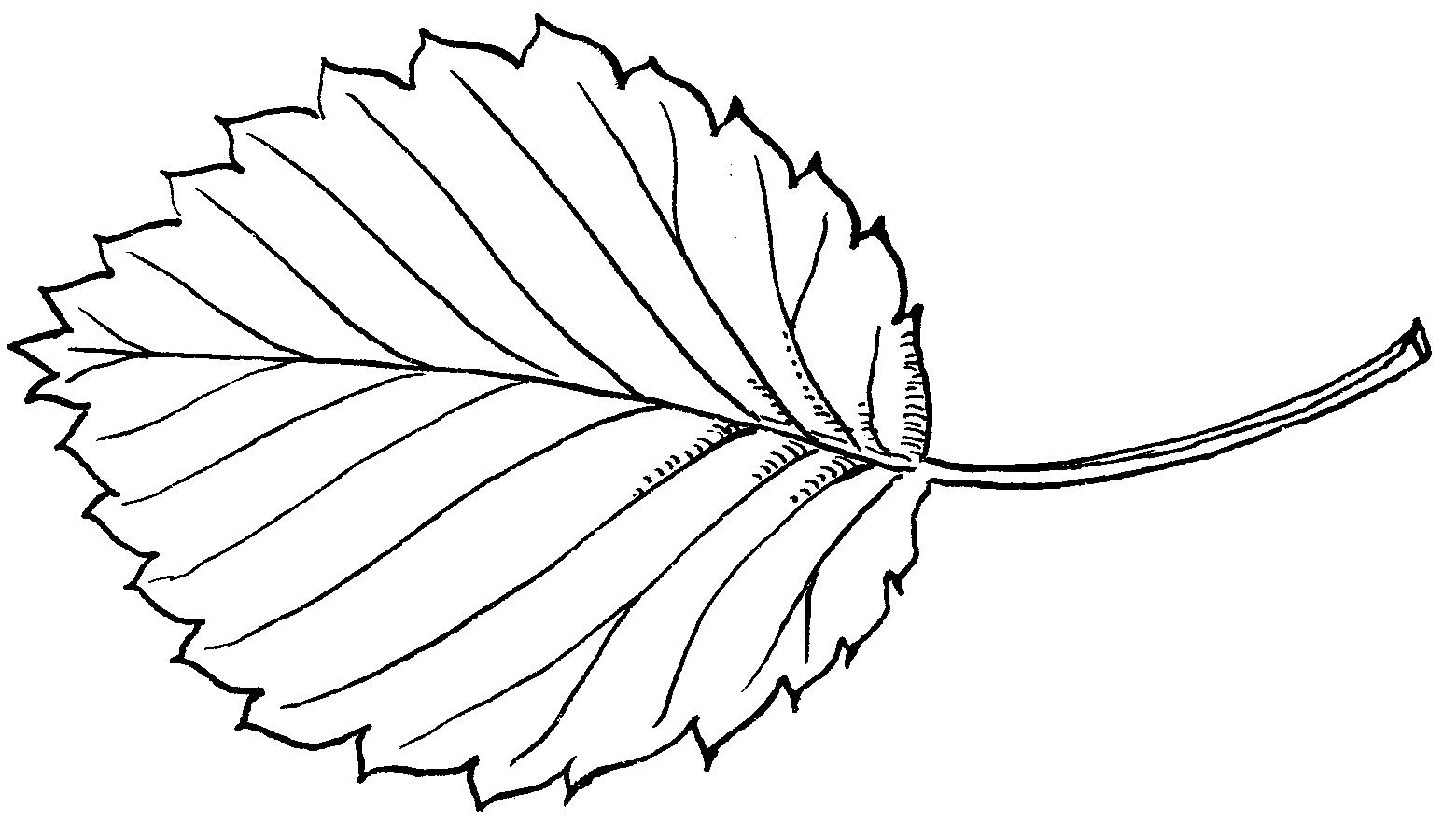 Opinions On Leaf