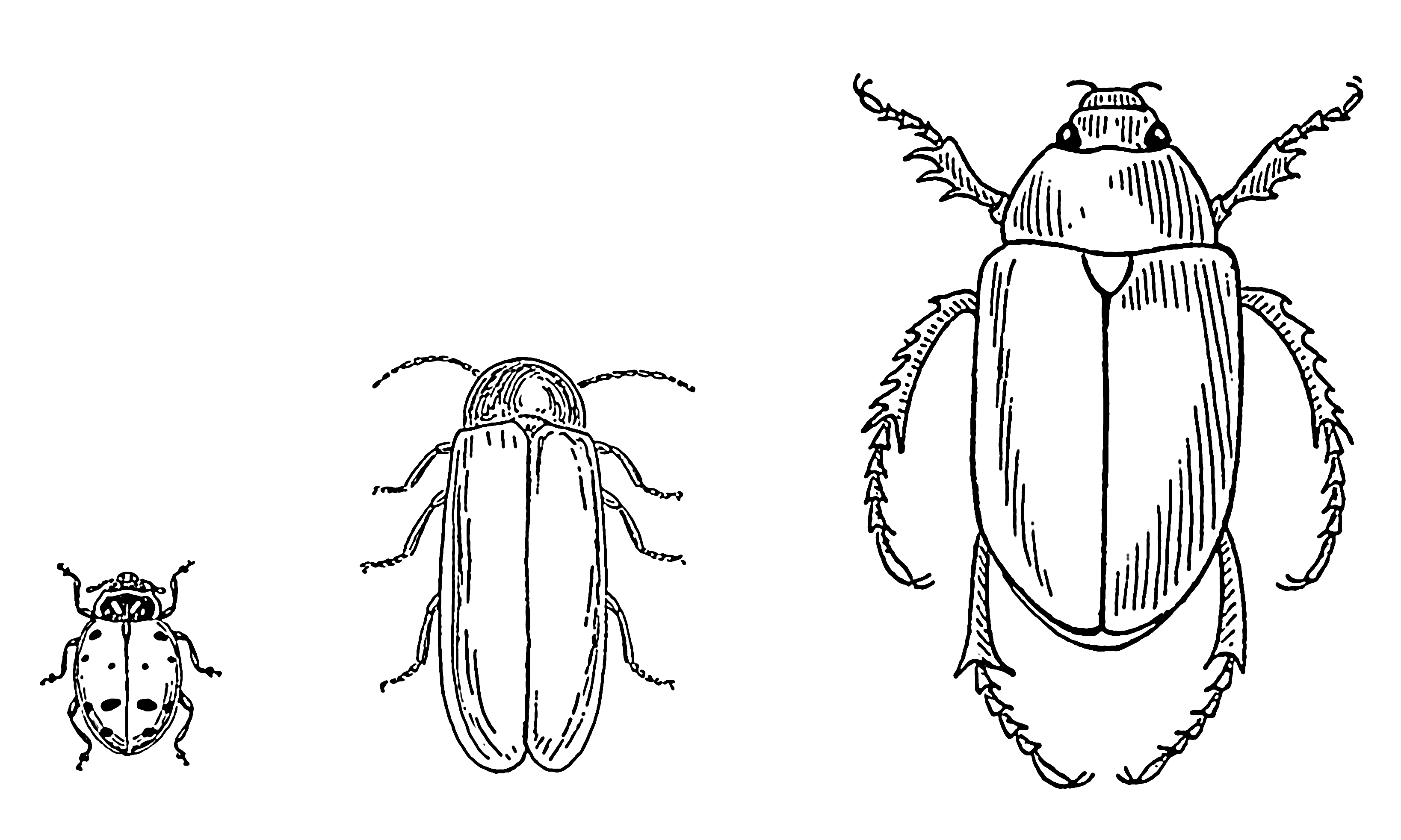 FileBeetle 001png The Work Of Gods Children