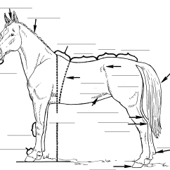 Parts Of A Blank Horse Diagram Standard Cat 5 Wiring Index Collaboration Images A3