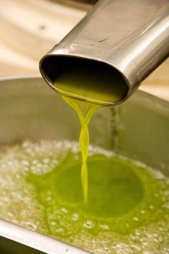 olive oil pressing at MvEvoy Ranch (photo courtesy of McEvoy Ranch)