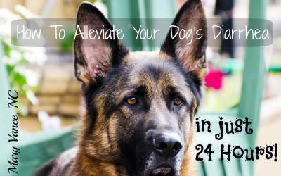 How to Alleviate Your Dog's Diarrhea in 24 Hours