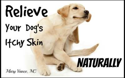 Relieve Your Dog's Itchy Skin Naturally