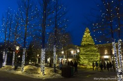 Tree lights at Blue River Plaza