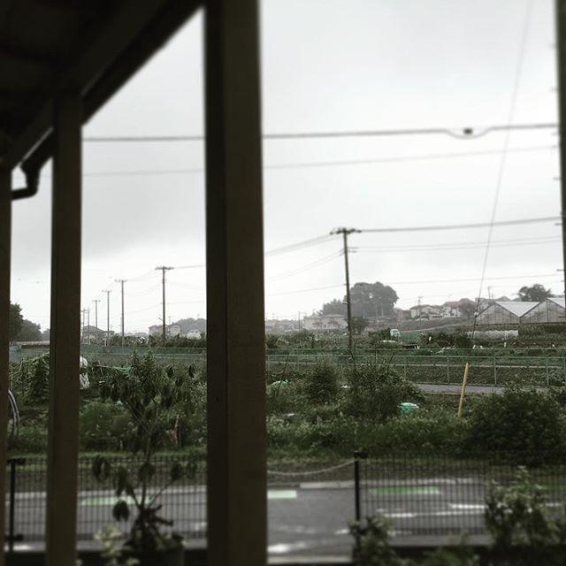 今日も雨水煙で風景が灰色になっていく