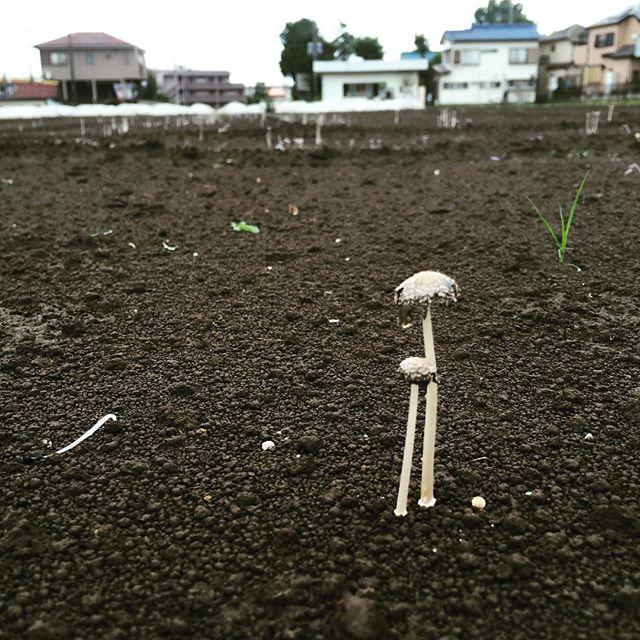 あれ?畑にキノコが生えてるよ。