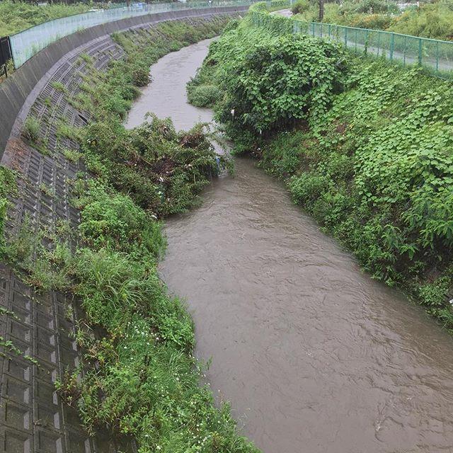 店の前の川、水位が80cmくらい上がったかな?